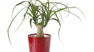 10 plantas para regalar