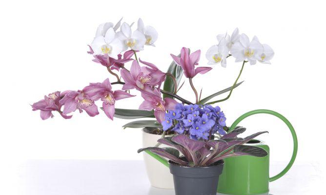 10 plantas para regalar hogarmania for Una planta ornamental