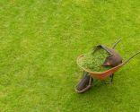 acolchado plantaciones - restos siega césped