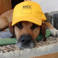 Max perro ganador del Concurso mascotas del mes de mayo