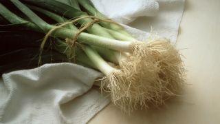 cultivar puerros