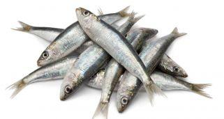 Receta de sardinas a la plancha karlos argui ano - Como cocinar sardinas ...