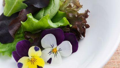 Flores Comestibles Bricomania