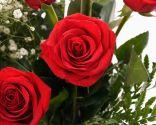 Rosales de flor roja