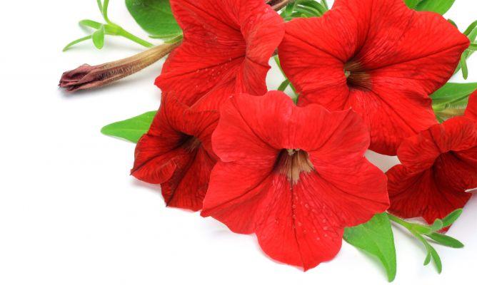 Plantas De Color Rojo Decogarden