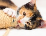 gatos rascadores caseros