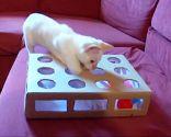 Juguete para gatos casero