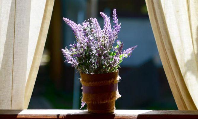 Plantas antiinsectos - Hogarmania