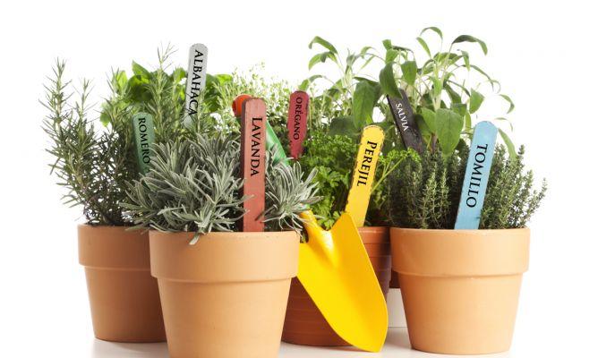 Plantas comestibles decogarden - Hogarutil plantas ...