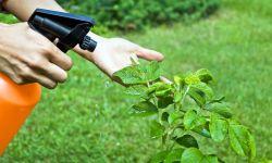 Insecticidas ecológicos