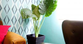 Calatea o calathea cuidados plantas jardiner a - Plantas grandes de interior resistentes ...