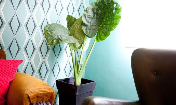 Plantas de interior retro decogarden for Plantas de interior fotos y nombres
