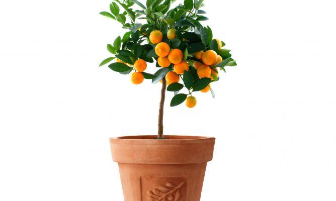 Árboles frutales enanos - decogarden