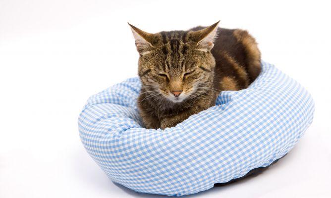 Cama de gatos casera decogarden for Cama para gatos