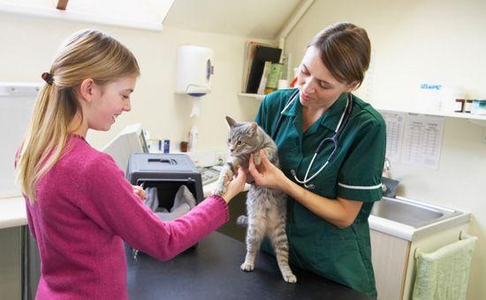 vacuna gato cachorro