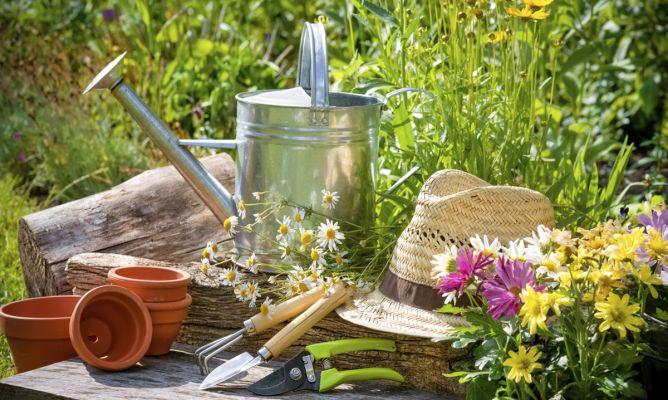 Tareas de jardiner a en agosto hogarmania - Hogarmania jardineria ...