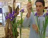 Terrario con tulipanes - Paso 2