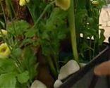 Terrario con tulipanes - Paso 4