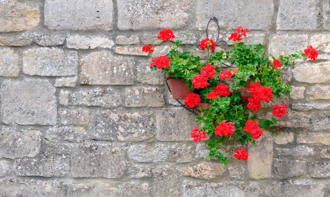 Vestir patio con flores de oto o bricoman a for Vestir una pared con plantas
