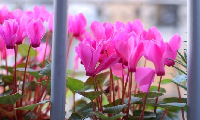 Plantas de oto o para el balc n decogarden for Plantas para invierno