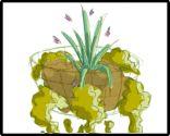 Esquema de plantación