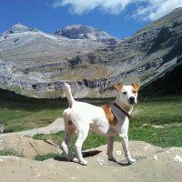 Perro Roni Concurso mascotas septiembre