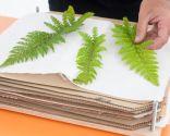 Prensa para hojas secas