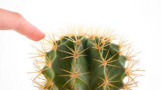 ¿Por qué los cactus tienen pinchos?