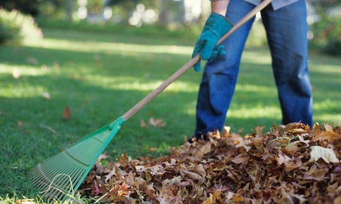 Tareas de jardiner a en octubre hemisferio norte - Imagenes de jardineria ...