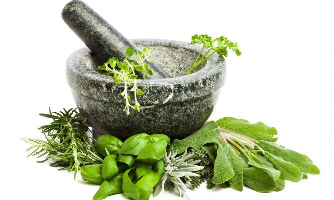 Plantas arom ticas dulces y de lim n bricoman a for Asociacion de plantas aromaticas