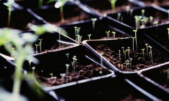 Cmo cultivar un huerto urbano en semilleros Hogarmania