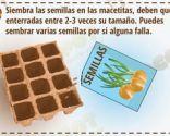 Cómo cultivar un huerto urbano en semilleros - Paso 2