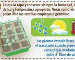 Cómo cultivar un huerto urbano en semilleros - Paso 4