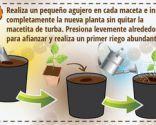 Cómo cultivar un huerto urbano en semilleros - Paso 6
