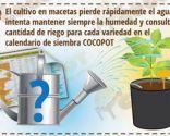 Cómo cultivar un huerto urbano en semilleros - Paso 7