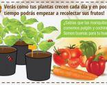 Cómo cultivar un huerto urbano en semilleros - Paso 8