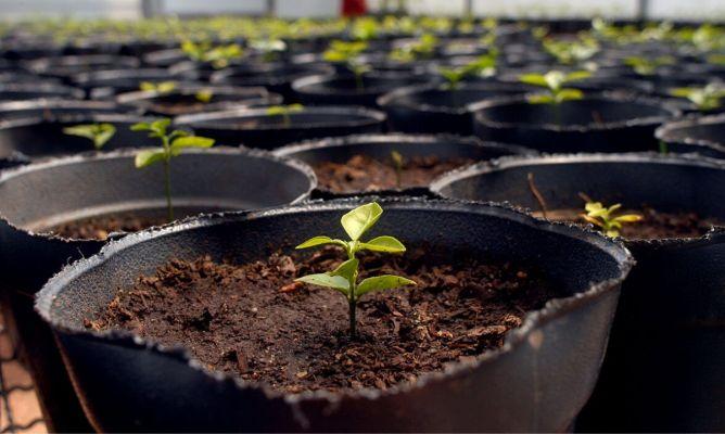 Iniciacin al huerto en macetas con semillas Hogarmania