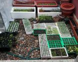 Semillas en semillero
