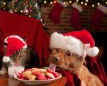 cuidar alimentación mascotas navidad