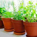 Plantas arom ticas de interior y exterior bricoman a for Plantas aromaticas de interior