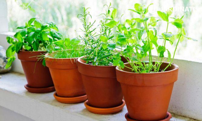 Plantas arom ticas de interior y exterior bricoman a - Plantas aromaticas jardin ...