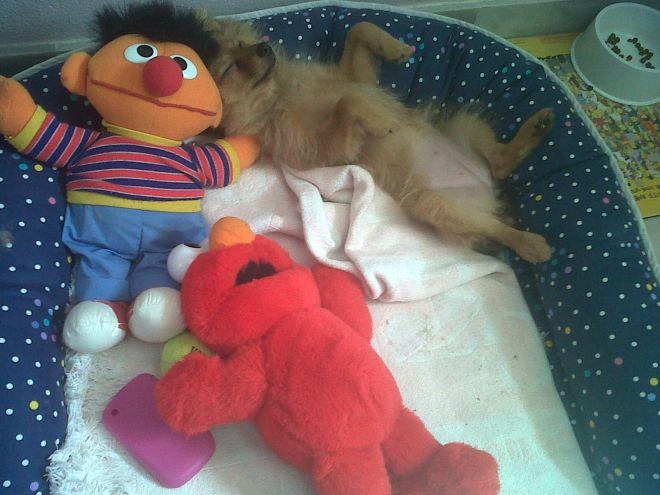 Bolita perra ganadora concurso diciembre