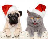 disfraces navideños mascotas
