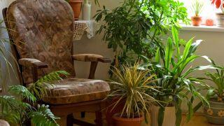 Plantas con hojas sorprendentes