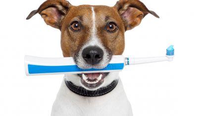 Limpiar ojos y quitar lega as hogarmania - Puedo banar a mi perro despues de la pipeta ...
