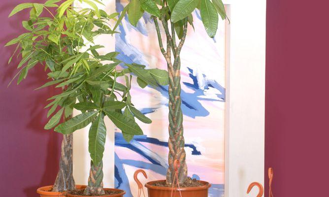 plantas con tronco decorativo - decogarden