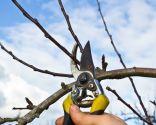 poda formación árboles frutales