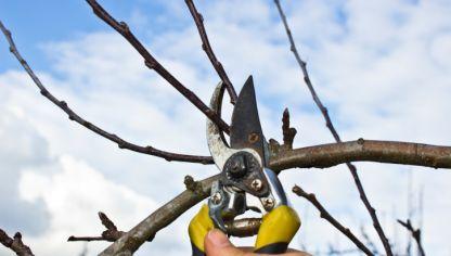 C mo podar el manzano bricoman a - Cuando se plantan los arboles frutales ...