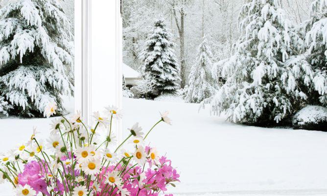 Tareas de jardiner a en enero hogarmania - Hogarmania jardineria ...