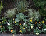 Flores de invierno en parterre - paso 7